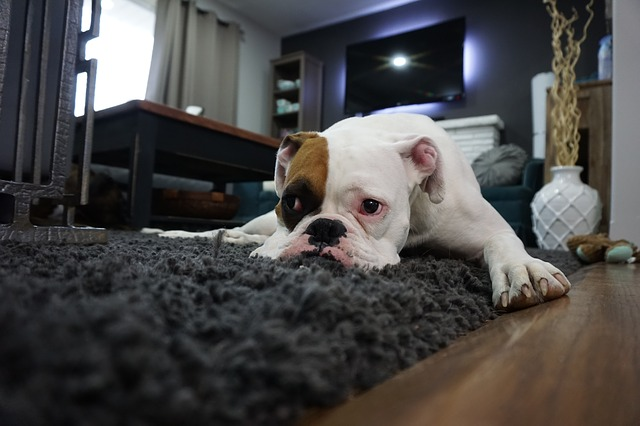 How Long Does A Professional Carpet Cleaning Take